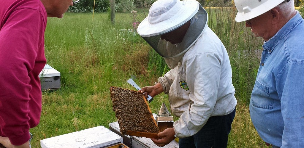 Due to its climate and environment, Marion County, Mississippi is a honey bee haven.